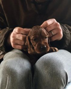 Puppy videos in stories for all those who requested  Unbelievable