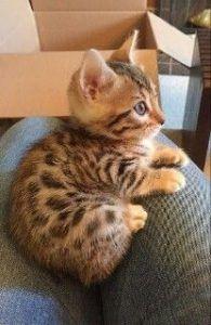 Gatti/Cats