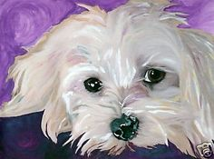 maltese dogs Ever see one of these sitting on your couch . or on your lap Tossled hair and soulful eyes are the loveable image of a Coton de Tulear. This image of the holdable and snuggly Coton is a limited Maltese Poodle, Maltese Dogs, Animal Paintings, Animal Drawings, Frise Art, Coton De Tulear Dogs, Dog Portraits, Dog Art, Original Art
