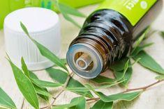 Conoscete il Tea Tree Oil? Si tratta di un olio essenziale dalle spiccate proprietà antisettiche. Scopriamone i benefici e gli usi!