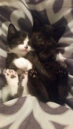 little cuties^^