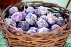 Basket of garlic, Montrose Farmers Market, CO
