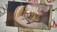 #luvfurever.com #cat accessories #cat #cat toys #my cat #online pet supplies Online Pet Supplies, Dog Supplies, Cat Online, Cat Accessories, Sleepy Cat, Cat Cat, Cat Toys, Pet Shop, Paper Shopping Bag