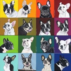 Rainbow Boston Terriers & Frenchies - by Jeroen Teunen