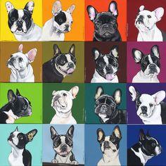 Rainbow Boston Terriers & Frenchies - by Jeroen Teunen