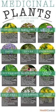 Medicinal Plants You Can Grow at Home #gardening #herbs #dan330 livedan330.com/...