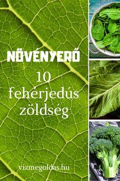 Tudatos táplálkozás - Növényerő: 10 fehérjedús zöldség