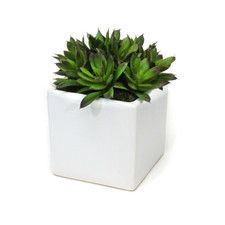 Succulents Desk Top Plant in Planter