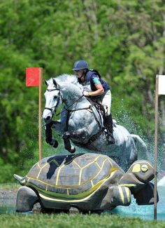 Turtle Jump: seriously, I know humans can't resist competition but I doubt horses would put themselves through these antics if they had a choice.