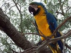 Animales Silvestres - Turismo Paraguay