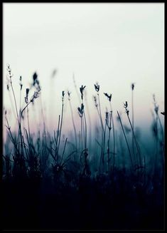 Plants at sunrise Poster in the group Posters & Prints / Sizes / 50x70cm | 20x28