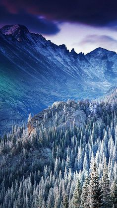 Winter Mountain Blue Woods Tree Nature Cold iPhone 6 wallpaper
