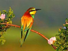صـــور بــــلا حـــدود : أٌجمل صور الطيور في العالم بجودة عالية