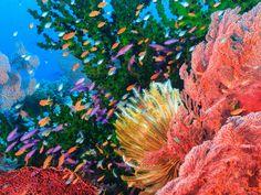 Webshots - Colorful Sealife, Fiji