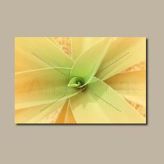 Agave Plant Rectangle Wall Art Orange Canvas. Agave Print Nature Canvas Art For Bathroom. Nature Photo Australian Sellers. Anthotype Process  Available From: $57.00 #noosa #CanvasArt #WallArtOrange #NatureCanvasPrint #NatureCanvas #RectangleWallArt #WallArt #NaturePhoto #AgavePlant #AgavePrint