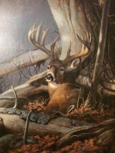 A Dixie Lady Deer Hunter: Good Morning Wildlife Paintings, Wildlife Art, Animal Paintings, Whitetail Deer Pictures, Deer Pics, Raul Gil, Deer Wallpaper, Deer Drawing, Hunting Art