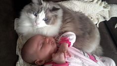Dexter The Cat And His Little Human - Love Meow