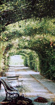 Path, Provence from French Country Living/Caroline Clifton-Mogg
