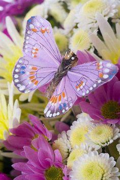 I want a butterfly garden.