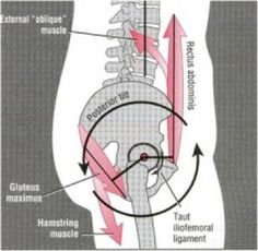 """When I started in Pilates, all I heard was """"There is no such thing as neutral pelvis"""". Well, that's not so. It was told to me and us as a defense against a bit of ignorance because my teacher di…"""
