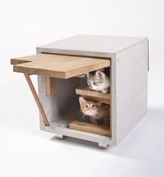 Architects for Animals: 'giving cat-shelter' event. Only for 'Archi-cats'   #cats #pets #puppy #interiors