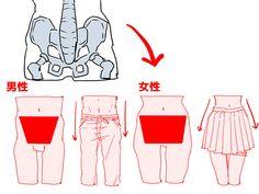 骨格と筋肉をチェック! 胴体を描く6つのポイント イラストの描き方  女性の方が「骨盤が大きい」    Check bones and muscles! 6 tips to draw the bust   Illustration tutorial  Females have a larger pelvis