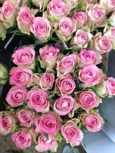 164 Best Pale Pink Weddings Images In 2019 Dream Wedding Floral