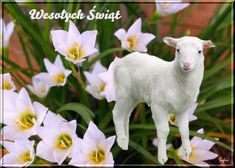 Lamb, Easter, Animals, Animales, Animaux, Easter Activities, Animal, Animais, Baby Sheep