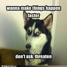 Bad Advice Husky