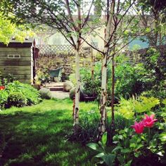 How To Urban Garden The 8 best perfect-for-privacy garden trees - The Middle-Sized Garden Privacy Trees, Privacy Plants, Garden Privacy, Privacy Landscaping, Garden Shrubs, Garden Trees, Trees To Plant, Best Trees For Privacy, Landscaping Contractors