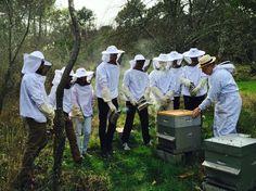 Première sortie sur un rucher pour l'association d'apiculture des Mines d'Alès ! Les membres étaient ravis d'avoir pu voir autant de chose. Nous attendons maintenant nos propres ruches.
