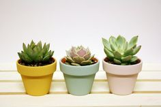 MINI Painted Clay Pot Succulents (Orange, blue, pink) - Perfect gift for everyone