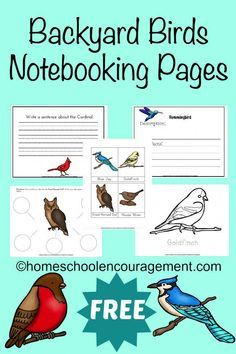 Are you learning about birds? Take a look at this FREE Backyard Birds Notebooking Page set. It's a great way to help your kids learn more about the birds that are common to your own backyard. #backyardbirds