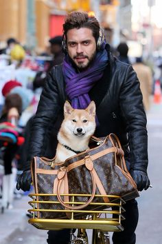 Lorenzo Martone Louis Vuitton Monogram Canvas Dog Carrier purple scarf and leather. Louis Vuitton Luggage, Louis Vuitton Handbags, Louis Vuitton Monogram, Vuitton Bag, Luxury Handbags, Luxury Bags, Japanese Dogs, Dog Carrier, Beautiful Handbags
