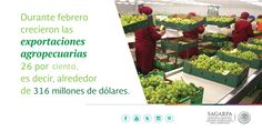 Durante febrero crecieron las exportaciones agropecuarias 26 por ciento, es decir, alrededor de 316 millones de dólares. SAGARPA SAGARPAMX