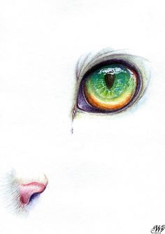 New Cats Eye Drawing Watercolor Painting Ideas Watercolor Cat, Watercolor Animals, Watercolor Paintings, Cat Paintings, Cat Drawing, Painting & Drawing, Art Et Illustration, Inspiration Art, Cat Tattoo