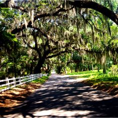 These Spanish moss-laden, old Southern Live Oaks make this road so charming. Thought I'd share the beauty. <3  BEAUFORT, SC