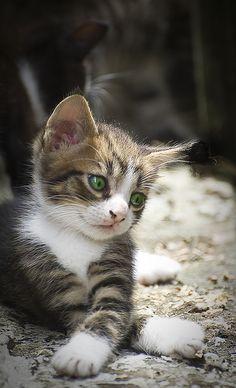 cute stray kitten | Flickr - Photo Sharing!