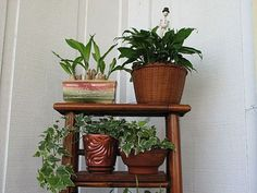 I've seen old ladders as shelving but I hadn't thought of using them for plants!