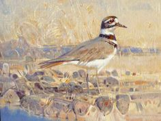 """""""Killdeer With Nest"""" by Jim Morgan 12"""" high X 16"""" wide, oil on linen - Wood River Fine Arts"""