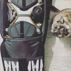 DJI Phantom 4 pro & Cat Mia