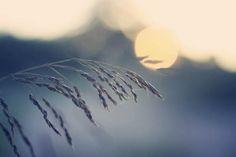 Peace Dandelion, Art Photography, Peace, Celestial, Flowers, Plants, Outdoor, Outdoors, Fine Art Photography