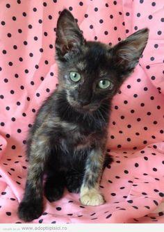 Adopt a romanian cat ! 0729499524