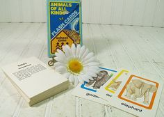 Animals of All Kinds Flash Cards Collection  by DivineOrders, $17.00