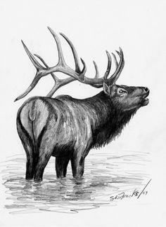 Elk Bull Elk Limited Edition Print Black & by SheriMareanArtist, $9.99