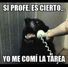 Memes-Chistosos-de-Gatos-y-Perros-33
