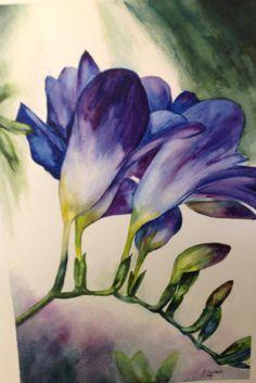 Freesia, Watercolour, Elizabeth Little