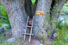 Treehouse Book Nook, Loveland, Colorado photo by sylvan WOW. This would be like being hugged by a tree! A real tree-huggers delight! Fresco, Loveland Colorado, Book Nooks, Reading Nooks, Kids Reading, Just Dream, Cozy Place, Architecture, That Way