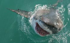 Sharks Have Brains Like… Ours