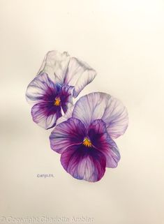 """Latest Totally Free Pansies drawing Ideas Pansies are the colorful flowers with """"faces."""" A cool-weather favorite, pansies are ideal for bo Blue Lotus Flower, Flower Art, Pansy Flower, Watercolor Flowers, Watercolor Paintings, Pansy Tattoo, Beautiful Flower Tattoos, Floral Artwork, Flower Images"""